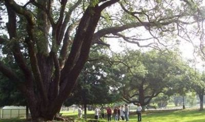 Green Heritage Walk - Redux