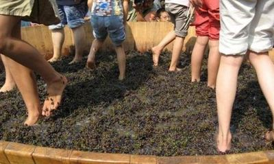 The Great Floh Grape Stomp of 2012!